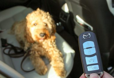 hund auto